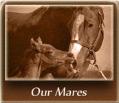 Our Mares